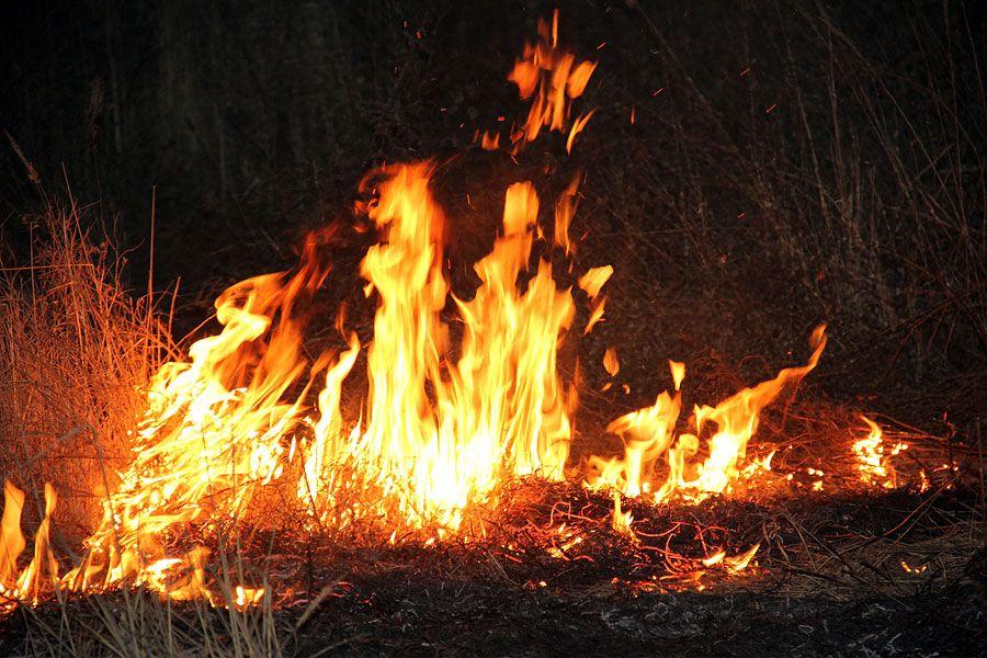 Борис Дубровский распорядился ввести в лесах Челябинской области особый режим